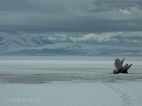 Antelope Island study in white 38