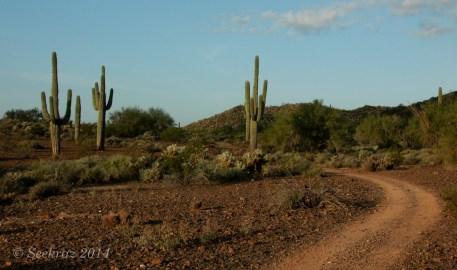 Desert double track