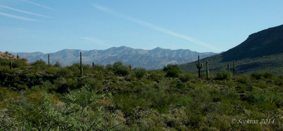 saguaro cacti with mountain panorama