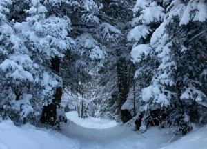 Entering Narnia through Little Cottonwood Canyon