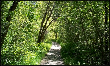 Little Cottonwood Canyon Trail in June, 2010