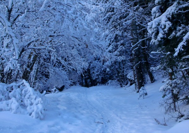 Snowy trail in Little Cottonwood Canyon