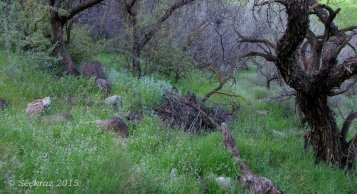 Sycamore Canyon beneath the trees
