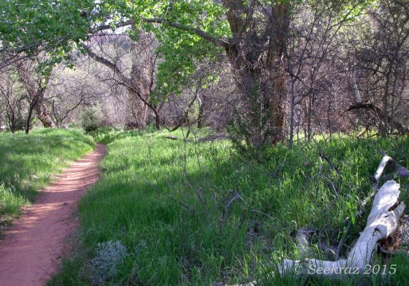 Sycamore Canyon trail with sunlight