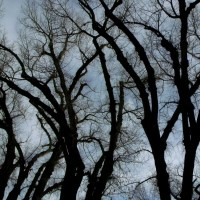 Liberty Park, Salt Lake City - Cottonwood Abstracts