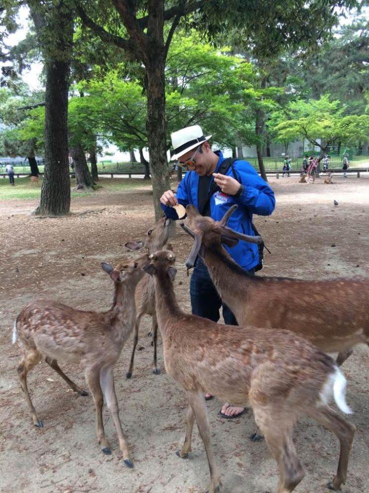 kyoto nara feeding