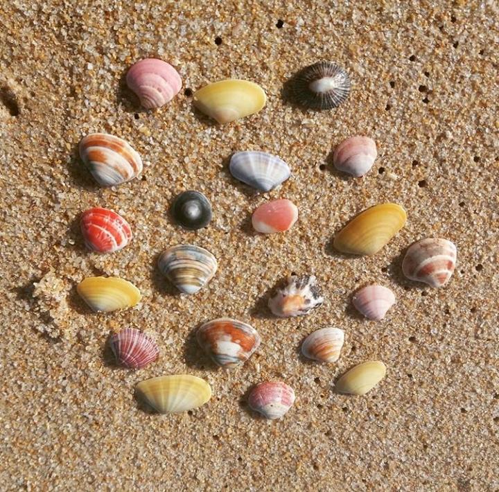 bunte muscheln strand