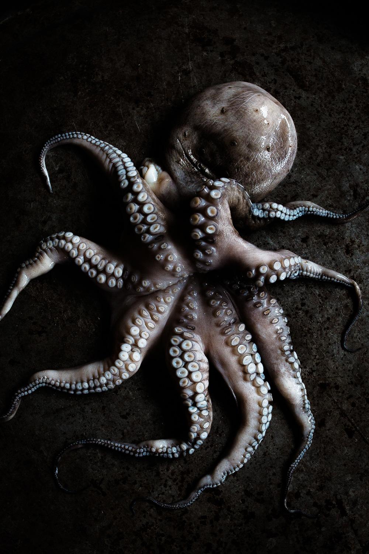 Gebratener Oktopus mit knuspriger Chorizo und Paprikamarmelade   seelenschmeichelei.de
