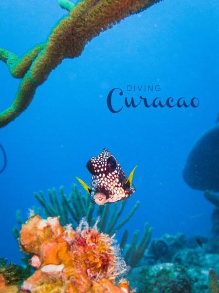Tauchen auf Curacao   seelenschmeichelei.de
