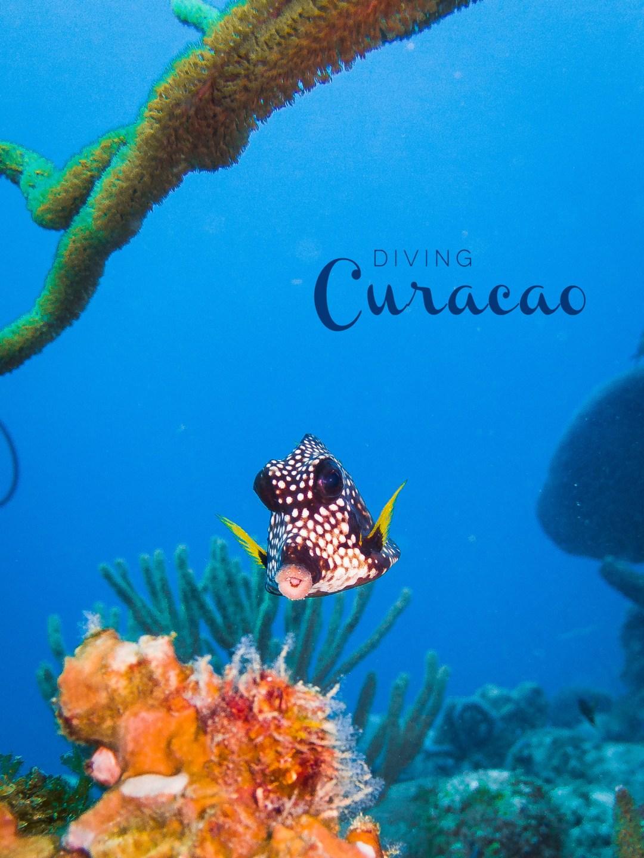 Tauchen auf Curacao | seelenschmeichelei.de