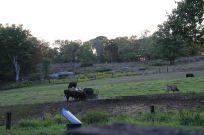25 - Farm