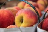 27 - peach festival IX