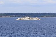 4 - Island Cruise