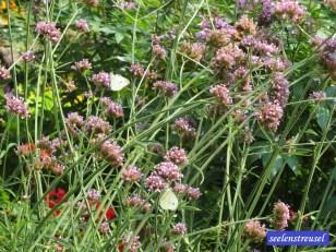 Schmetterlinge im Philosphengärtchen
