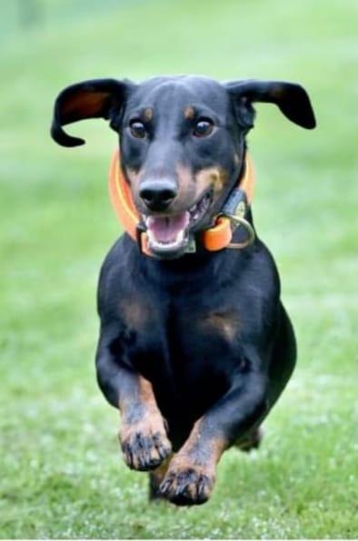 Wastl Hund Tierenergetik
