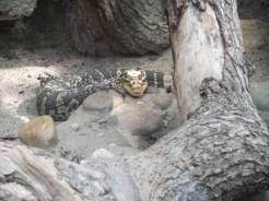 irgendein Reptil