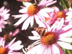 Blüten mit Besuchern