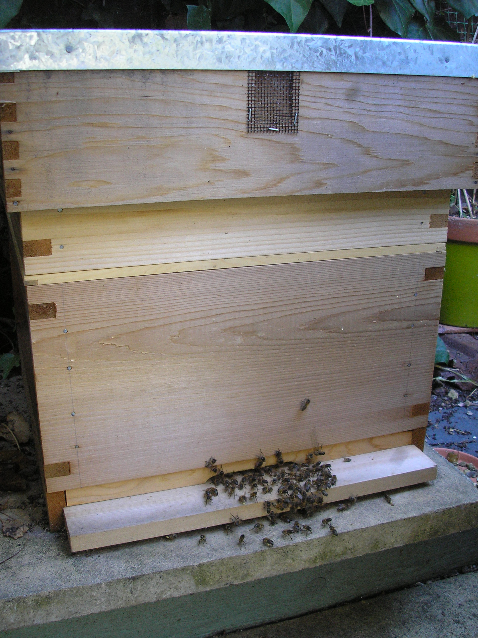 maltese bees and the work of ecogozo south east essex organic