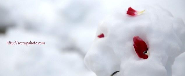 みなとみらいの雪
