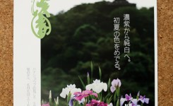 三渓園 ハナショウブ チラシ