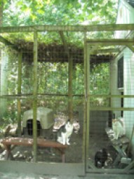 outdoor-cat-enclosure