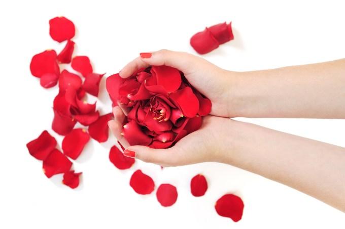 woman hand holding rose petals