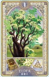 歐甘樹卡 (15) 接骨木