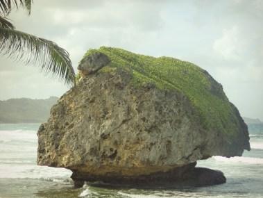 bathsheba coral boulder