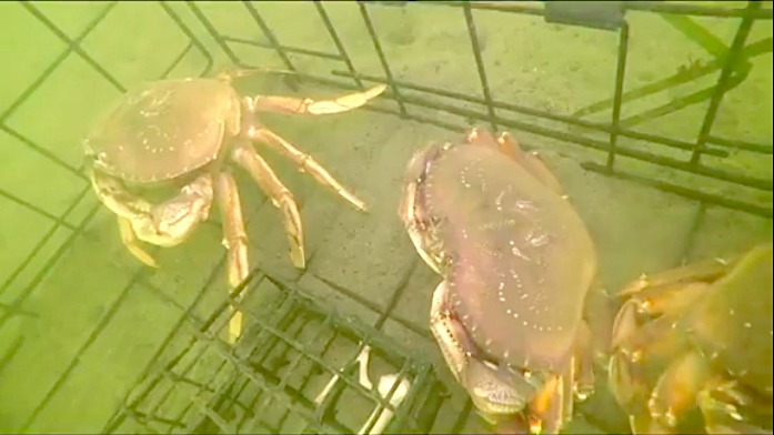 Crab fishing camera using Underwater WiFi cable