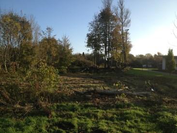 Der fældes træer - 6 - 2014-10-28