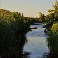 Trunk River