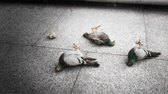 One_on_one_with_the_requiem_after_burner_kid_dead_pigeons