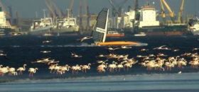 Vestas Sairocket auf ihrem Speed-Strip hinter Flamingos. © Sailrocket
