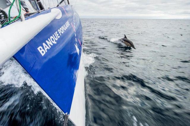 Delphin begleitet Segelboot