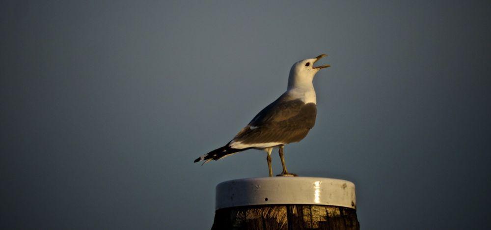 Digger Hamburg Kleinkrieg Mit Der Nachbarschaft Im Hafen