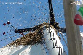 Bienenschwarm auf einer Yacht