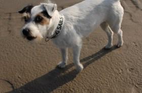 Polly ist das hier alles unheimlich - eigentlich ist sie am Strand immer die Schnellste © Digger Hamburg