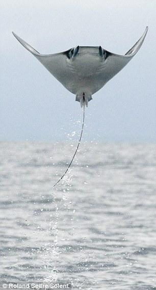 Beeindruckende Flugtechnik © seitre