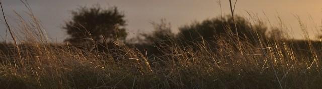 Birkholms Gräser leuchten in der Sonne © Maike Chistiansen