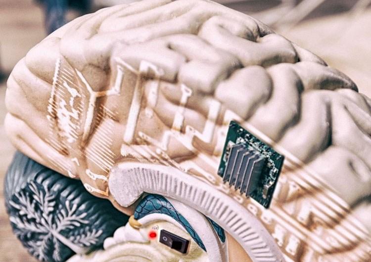 Киборги где-то рядом: учёные научились вживлять электронику в мозг без риска отторжения