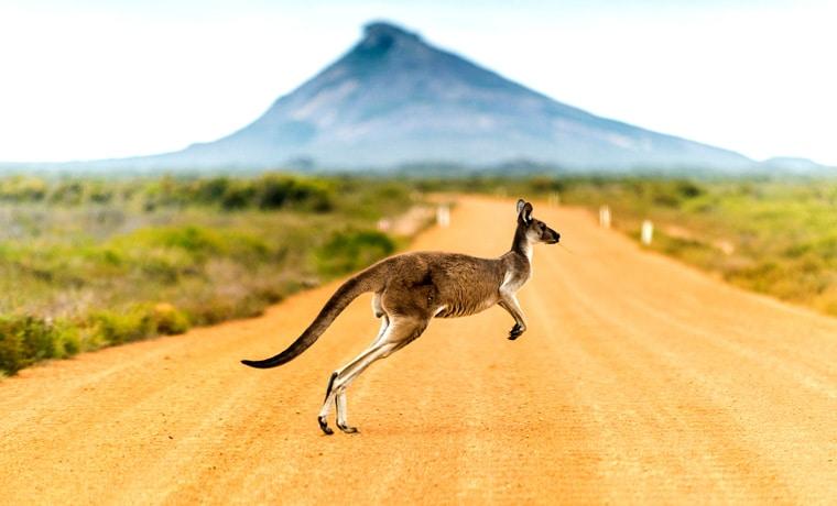 seguro viagem Oceania canguru