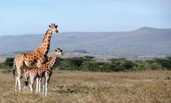contrate o melhor seguro viagem África e visite os safaris