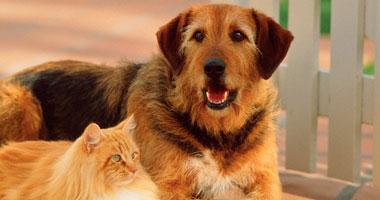 Photo of فرو القطط والكلاب يصيبك بعدوى كورونا