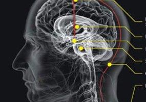 Pengobatan Herbal Penyakit Epilepsi