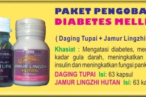 Pengobatan Herbal Diabetes dari Daging Tupai Dan Jamur Lingzhi