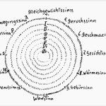 Die 12 Sinne in der seelischen Beobachtung