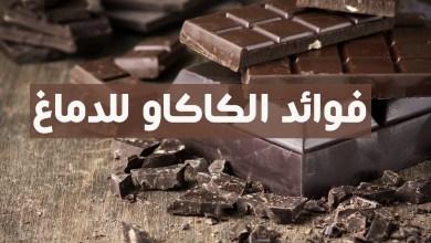 فوائد الكاكاو للدماغ