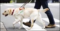 太秦映画村に盲導犬を連れて行ってもよいか?ペットの同伴は大丈夫?2