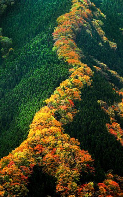 奈良県なめご谷の紅葉