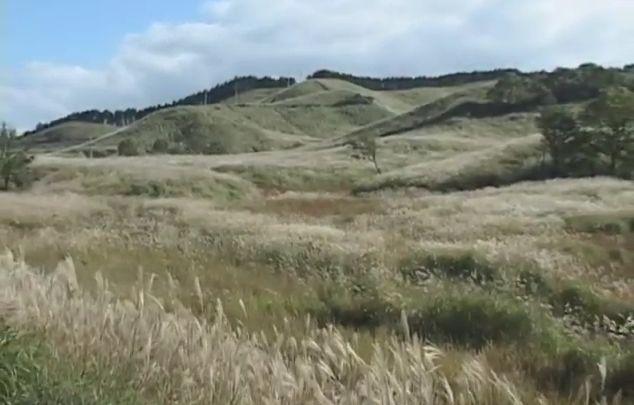 砥峰高原のススキ